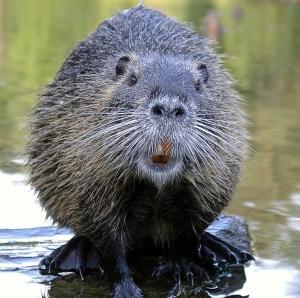 Blog > Beaver